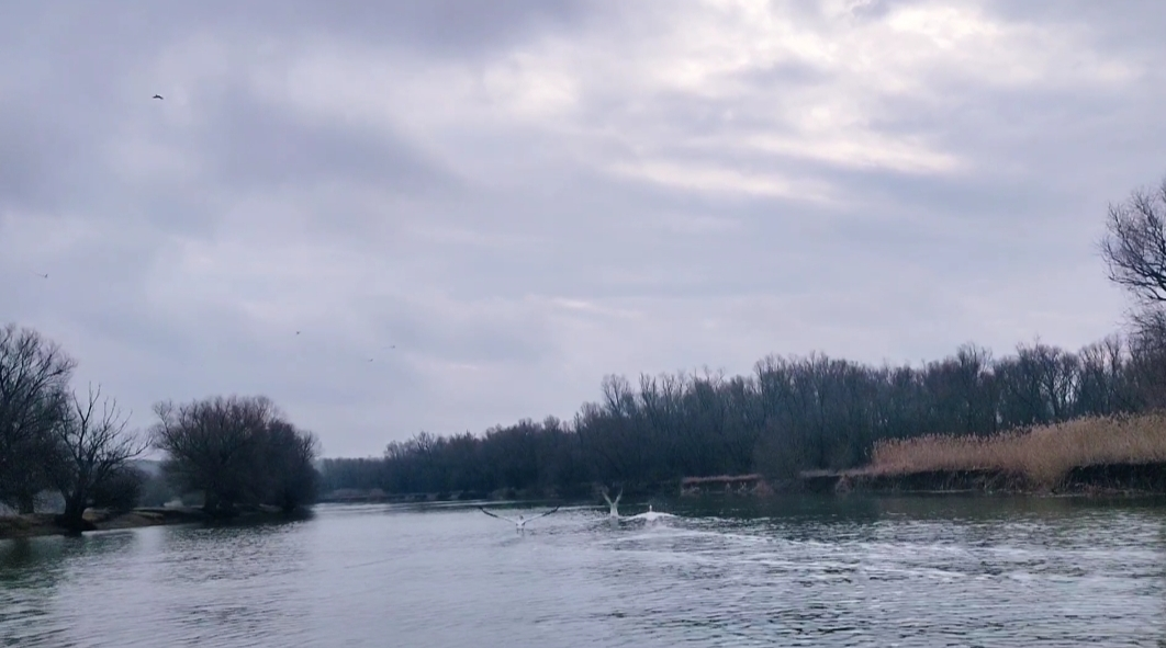Râul Prut